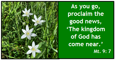 As you go, proclaim the good news, 'The kingdom of God is near.' Mt 9:7
