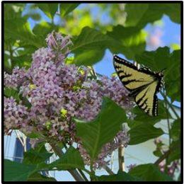 Sunday, June 28, 2020 – Psalm 13 Meditation